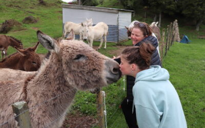 Donkeys love visitors